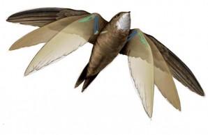 Bird biomechanics 2